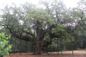 Floresta de Sherwood
