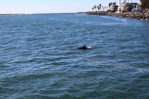 Golfinho inagurando passeio