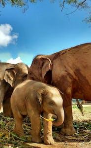 """Os elefantes vivem muito próximos uns dos outros. Mais até do que nós, """"serem pensantes""""."""