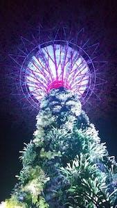 À noite, as 'árvores' se iluminam num espetáculo de cores inesquecível!