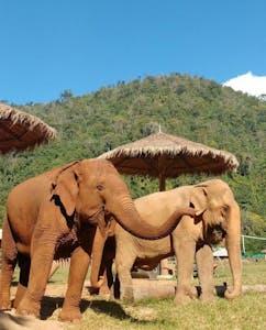 """A tromba do elefante funciona como uma espécie de """"periscópio"""""""