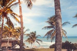 Coqueiros balançando ao vento em uma praia localizada na Venezuela.